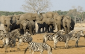 South Africa bags 'Best International Destination for Wildlife' award
