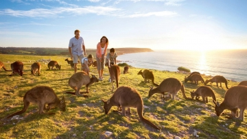 South Australia witnesses 18% up in Indian visitations