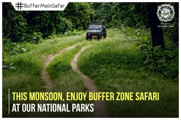 Madhya Pradesh flaunts its wildlife in monsoon #BufferMeinSafar