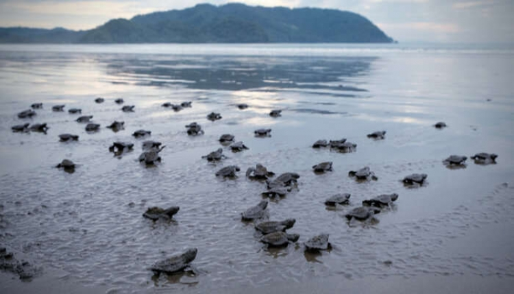 Konkan Tourism's second webinar to focus on turtle tourism