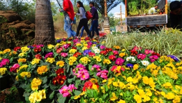 Garden Tourism Festival attracts 50000 visitors